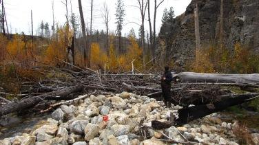 Fire disturbance inputs in Bellevue Creek from the 2003 Okanagan Mountain Park fire.